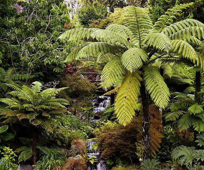 Grönt och frodigt i regnskog på Nya Zeeland.
