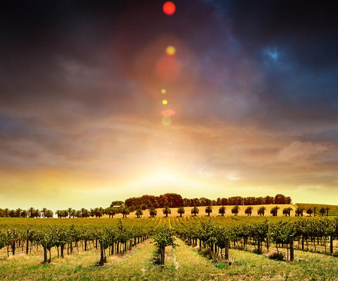 Australien, vindistriktet Barossa Valley