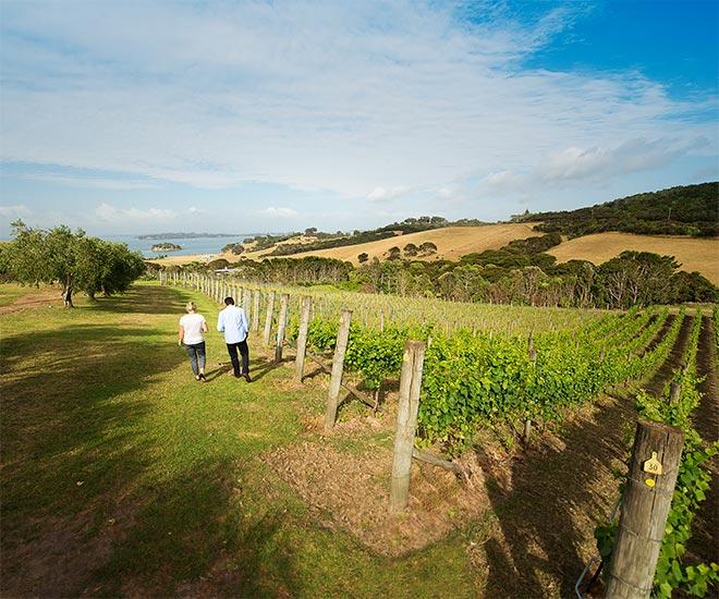 Nya Zeeland Auckland, Waiheke Island och vingårdsbesök