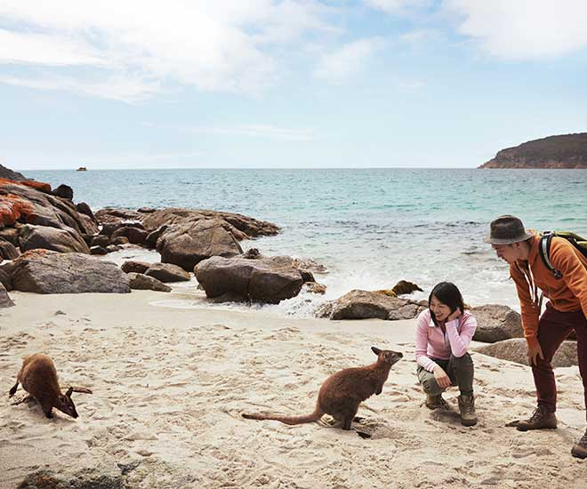 Kangaroo Island - Den Stora Upplevelseresan med Håkan Nilsson
