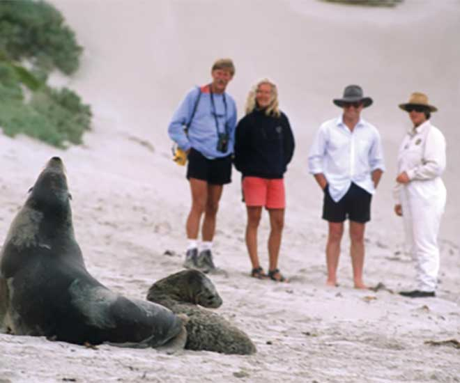 Under vistelsen på Kangaroo Island besöker vi Seal Bay, här kommer vi riktigt nära sälarna.