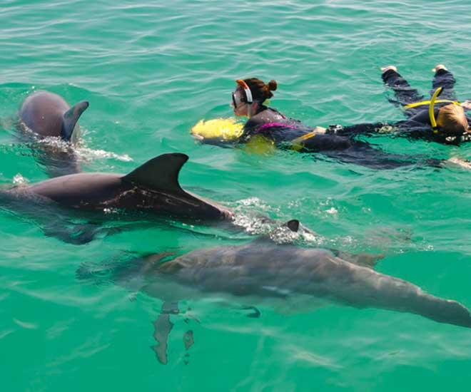 Våra lekfulla vänner, delfinerna, vill gärna ha sällskap i vattnet.